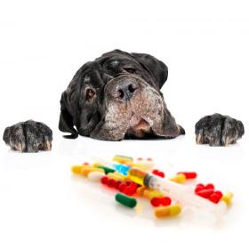 medicamentos veterinarios